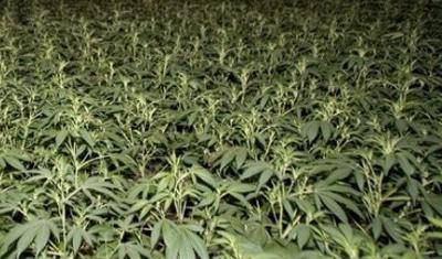 Vier verdachten waarvan één Bodegraver aangehouden in verband met handel en productie van drugs