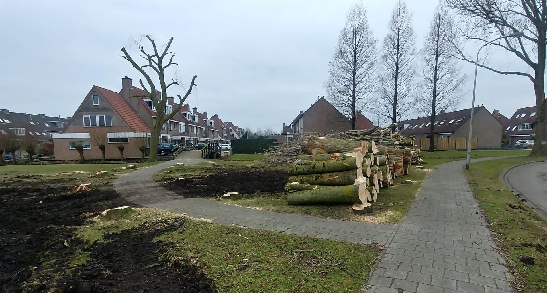 Bomenkap in Reeuwijk-Brug