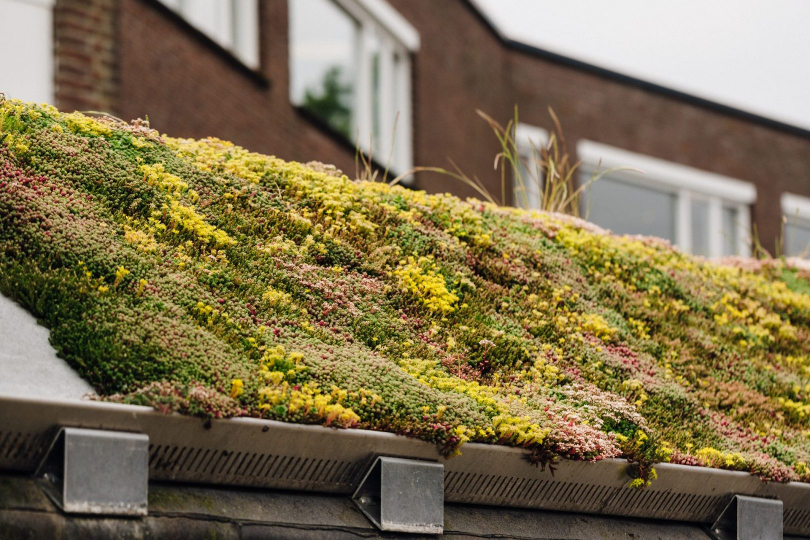 Subsidie voor je groene dak